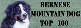 Bernese Mountain Dog Top 100